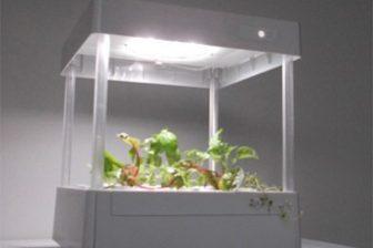 1万円以下でできる家庭用水耕栽培も登場でブーム到来か?