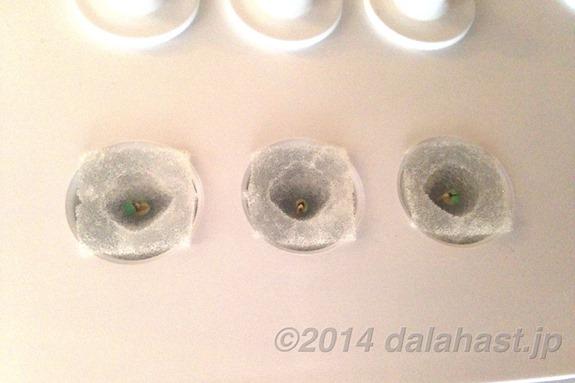 LED水耕発芽