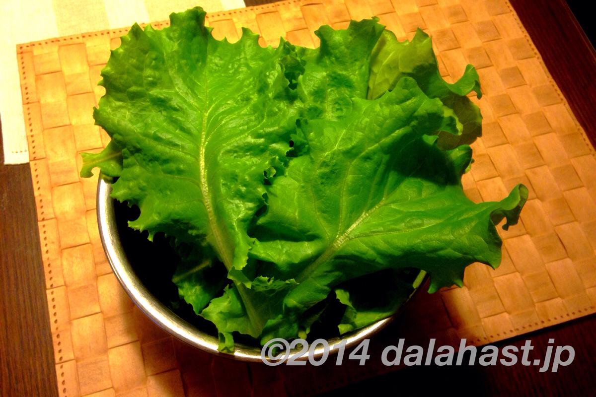 Green FarmでLED水耕栽培日記 22日目レタス収穫