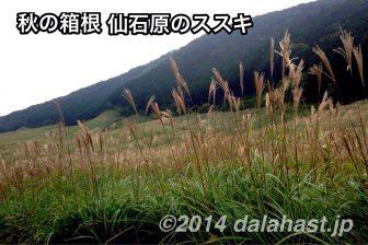 初秋のススキを楽しむ箱根仙石原へぶらっとドライブ