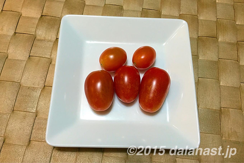 水耕栽培プチトマト