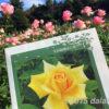 生田緑地ばら苑 2015秋 無料でバラの香りに癒される庭園