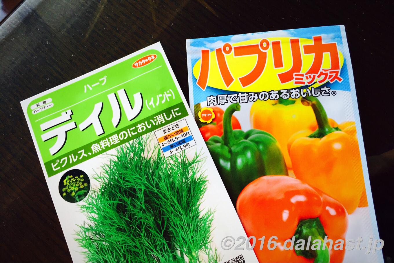 【水耕栽培】パプリカとディルの水耕栽培を始めました