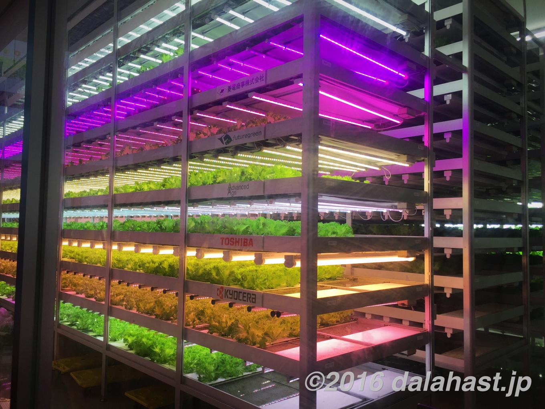 千葉大学植物工場