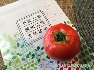 【大人の社会見学】 千葉大学の植物工場で最新のインテリジェントLED水耕栽培環境を体感できる!