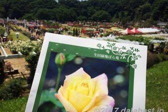 生田緑地ばら苑 2017年春 好天に恵まれ散策日和
