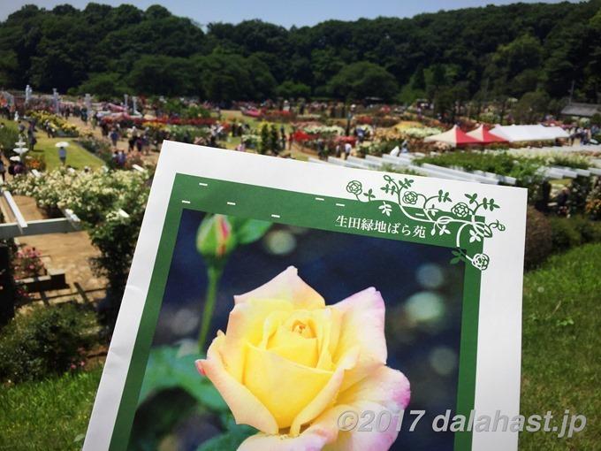生田緑地ばら苑2017春