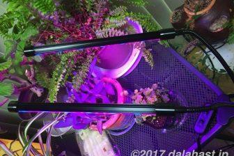 【レビュー】 植物育成LED照明(ライト)赤色・青色LED効果で光合成促進!室内でもグングン育つ