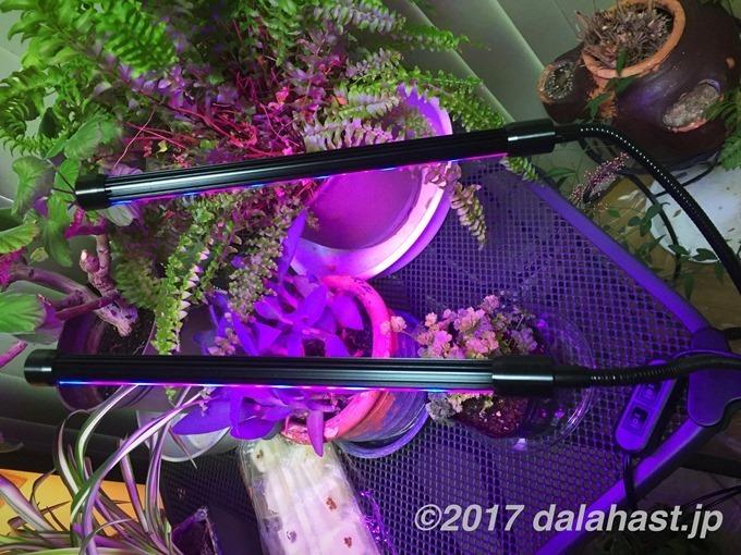 植物用LEDライト