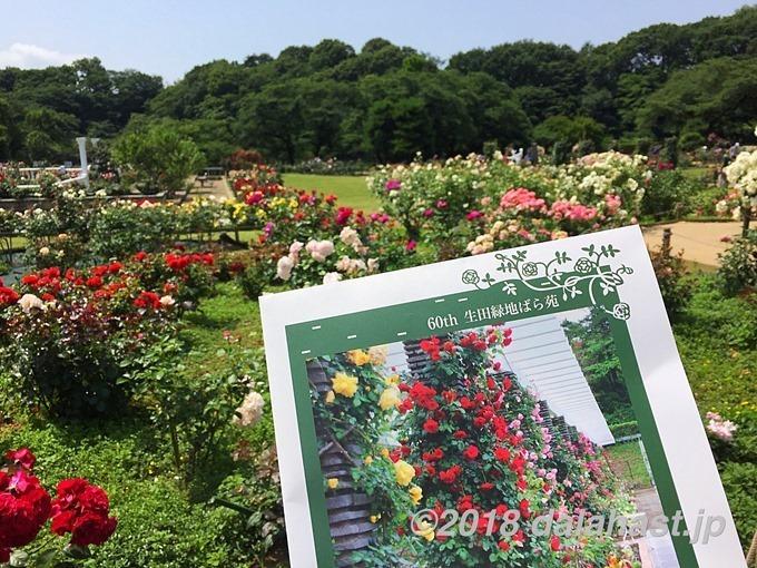 生田緑地ばら苑2018年春