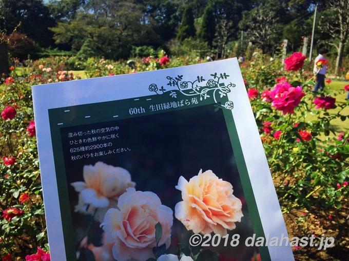 生田緑地ばら苑2018秋