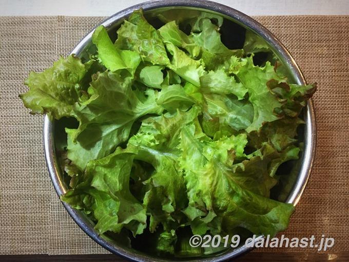 サラダ菜収穫20190103