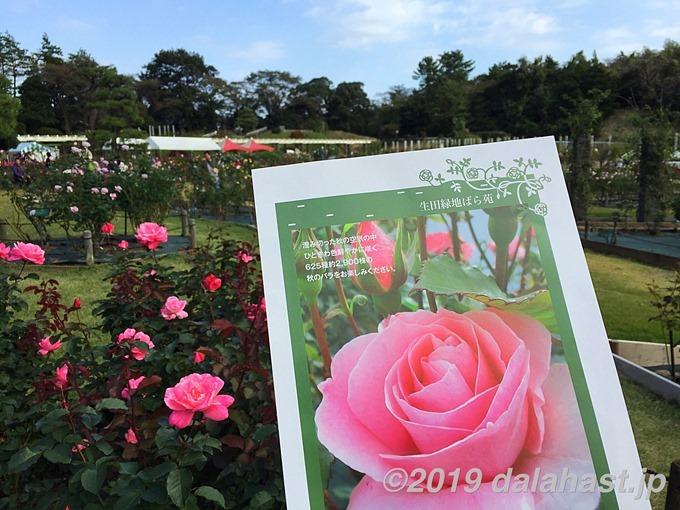 生田緑地ばら苑2019年秋2