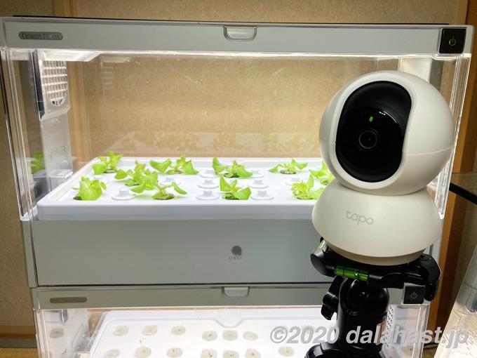 Tapo C200で水耕栽培器リモート監視